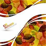 Colorful vector autumn background with place for your text Stock Photo - Royalty-Free, Artist: orsonsurf                     , Code: 400-05715737