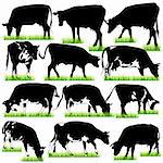 12 Detailed Cows Silhouettes Set Stock Photo - Royalty-Free, Artist: kaludov                       , Code: 400-05717557