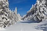 a pine forest in the middle of winter Stock Photo - Royalty-Free, Artist: porojnicu                     , Code: 400-05717701