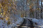 Early snowfall that caught the fall leave still on the trees Stock Photo - Royalty-Free, Artist: gsagi                         , Code: 400-05717913