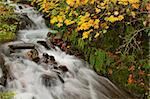 Fall Colors at Wahkeena Falls Waterfall in Columbia River Gorge Stock Photo - Royalty-Free, Artist: jpldesigns, Code: 400-05718920