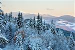 winter sunset mountain landscape with rime and snow covered spruce trees  (Carpathian, Ukraine) Stock Photo - Royalty-Free, Artist: Yuriy                         , Code: 400-05719575