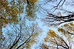 Crown of different autumn trees against the background of blue sky. View from below Stock Photo - Royalty-Free, Artist: qiiip                         , Code: 400-05720029