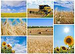 Multicolored image collection of harvesting Stock Photo - Royalty-Free, Artist: A7880S                        , Code: 400-05721746
