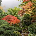 Creek at Japanese Garden One Foggy Morning in the Fall Stock Photo - Royalty-Free, Artist: jpldesigns                    , Code: 400-05722834