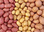 harvested potato tubers different varieties Stock Photo - Royalty-Free, Artist: DLeonis                       , Code: 400-05724339