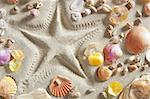 beach with starfish printed in white sand many clam shells as a summer vacation background Stock Photo - Royalty-Free, Artist: lunamarina                    , Code: 400-05724647