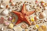 beach with white sand and starfishwith shells still life like summer vacation background Stock Photo - Royalty-Free, Artist: lunamarina                    , Code: 400-05724652