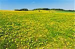 Beautiful spring panoramatic shot with a dandelion meadow Stock Photo - Royalty-Free, Artist: Fyletto                       , Code: 400-05725664