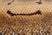 snake skin - Close-up of Spinner Python, Royal python skin, ball python, Python regius, 2 years old Stock Photo - Royalty-Freenull, Code: 400-05727357