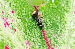black ant in green nature or in the garden Stock Photo - Royalty-Free, Artist: SweetCrisis                   , Code: 400-05727763