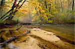 Autumn in the woods with a creek running through the woods one day with haze Stock Photo - Royalty-Free, Artist: ckkeller                      , Code: 400-05728157