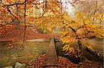 Autumn in the woods with a creek running through the woods with a bridge over Stock Photo - Royalty-Free, Artist: ckkeller                      , Code: 400-05728165