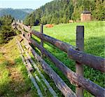 Two cows grazing on summer morning meadow (Carpathian, Ukraine)