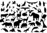 Contour images of fauna on the planet Earth Stock Photo - Royalty-Freenull, Code: 400-05730897