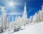 winter snow covered fir trees on mountainside on blue sky with sunshine background Stock Photo - Royalty-Free, Artist: Yuriy                         , Code: 400-05731004