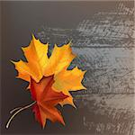 Autumn maple leafs on gray wooden texture surface. Stock Photo - Royalty-Free, Artist: tatianat                      , Code: 400-05732147