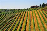 Hill Of Tuscany With Vineyard In The Chianti Region Stock Photo - Royalty-Free, Artist: gkuna                         , Code: 400-05732478