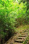bamboo forest path Stock Photo - Royalty-Free, Artist: leungchopan                   , Code: 400-05733052