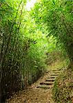 path in bamboo forest Stock Photo - Royalty-Free, Artist: leungchopan                   , Code: 400-05733053