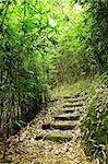 path in bamboo forest Stock Photo - Royalty-Free, Artist: leungchopan                   , Code: 400-05733054