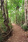 Rain forest trail tablelands Queensland Australia tropical jungle path near crater lake Eacham Stock Photo - Royalty-Free, Artist: kikkerdirk                    , Code: 400-05735779