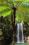 tree fern and waterfall in tropical rain forest paradise at Millaa Millaa falls Tablelands Queensland Australia lush green pristine rainforest Stock Photo - Royalty-Free, Artist: kikkerdirk                    , Code: 400-05735796