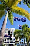 flaf in tropical Queensland australia palm trees and blue sky and skyscraper Stock Photo - Royalty-Free, Artist: kikkerdirk                    , Code: 400-05735820