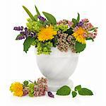 Lavender, valerian, ladies mantle and dandelion flower heads with aloe vera and lemon balm leaves in a marble mortar isolated over white background. Stock Photo - Royalty-Free, Artist: marilyna                      , Code: 400-05735884