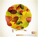 Autumn abstract floral background - circle from colorful leafs with place for your text Stock Photo - Royalty-Free, Artist: orsonsurf                     , Code: 400-05737303