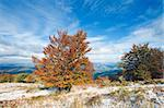 October Carpathian mountain plateau with first winter snow and autumn colorful tree