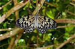 beautiful butterfly on a branch Stock Photo - Royalty-Free, Artist: hansenn                       , Code: 400-05738863