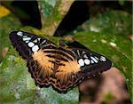 beautiful butterfly sitting on a large tropical leave Stock Photo - Royalty-Free, Artist: hansenn                       , Code: 400-05738864