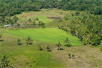 philippine terrace farming - small rice field on Bohol, Philippines Stock Photo - Royalty-Freenull, Code: 400-05738866