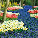 Keukenhof Gardens, Lisse, Netherlands Stock Photo - Royalty-Free, Artist: phbcz                         , Code: 400-05739389