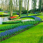 Keukenhof Gardens, Lisse, Netherlands Stock Photo - Royalty-Free, Artist: phbcz                         , Code: 400-05739390