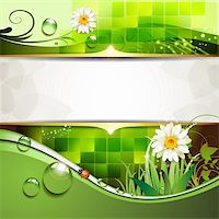 Green background with daisy and drops of water Stock Photo - Royalty-Freenull, Code: 400-05742209