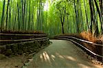 Famous bamboo grove at Arashiyama, Kyoto - Japan Stock Photo - Royalty-Free, Artist: Fyletto                       , Code: 400-05743526