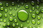 Beautiful water drops on a leaf close-up Stock Photo - Royalty-Free, Artist: haveseen                      , Code: 400-05744559