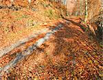 Autumn mountain dirty road and beautiful October beech forest (Carpathian, Ukraine). Stock Photo - Royalty-Free, Artist: Yuriy                         , Code: 400-05745560