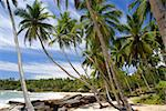 Tropical paradise on Sri Lanka with palms hanging over the white beach and turquoise sea Stock Photo - Royalty-Free, Artist: Fyletto                       , Code: 400-05745632