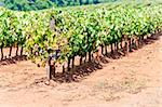 vineyars in Alentejo, Portugal Stock Photo - Royalty-Free, Artist: phbcz                         , Code: 400-05749883