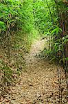 bamboo forest path Stock Photo - Royalty-Free, Artist: leungchopan                   , Code: 400-05751780