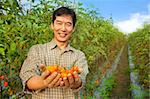 asian farmer holding tomato on his farm Stock Photo - Royalty-Free, Artist: tomwang                       , Code: 400-05755140