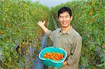 successful asian farmer holding tomato on his farm Stock Photo - Royalty-Free, Artist: tomwang                       , Code: 400-05755153