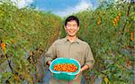 middle aged happy  asian farmer holding tomato on his farm Stock Photo - Royalty-Free, Artist: tomwang                       , Code: 400-05755195