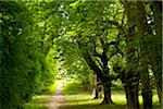 Path thru forest in Killarney National Park Stock Photo - Premium Royalty-Free, Artist: Aurora Photos, Code: 6106-05759210