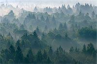fog (weather) - Morning Mist in Forest, Isar Valley, Wolfratshausen, Upper Bavaria, Bavaria, Germany Stock Photo - Premium Royalty-Freenull, Code: 600-05762077