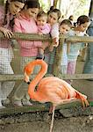 Group of children looking at America Flamingo (Phoenicopterus ruber) in zoo Stock Photo - Premium Royalty-Free, Artist: Minden Pictures, Code: 695-05763785