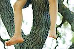 Child sitting in tree, legs dangling, low angle view, cropped
